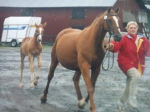 Mia med Gardenia och Nalle på Elmia 1993