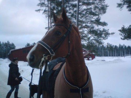 Nalle gillar vintern!