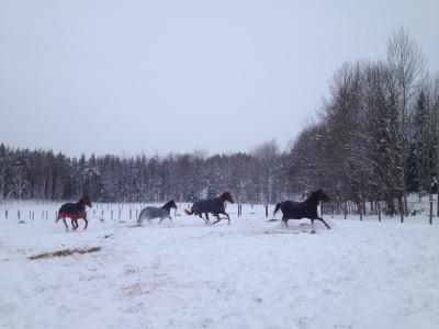 Hästarna i stora hagen