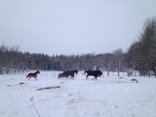 Busiga hästar