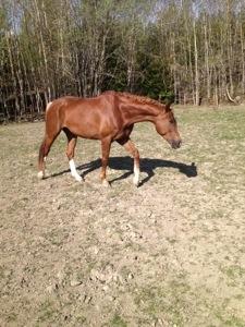 Kan man ha en bättre morgon än när ens häst kommer till en i hagen?