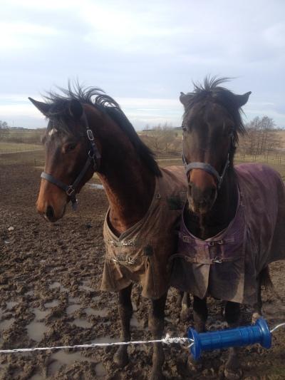 Conny och Ronny2