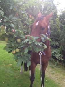 Lord Lexington i mattes trädgård